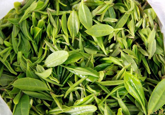 普洱茶越陈越香的最基础因素——杀青。